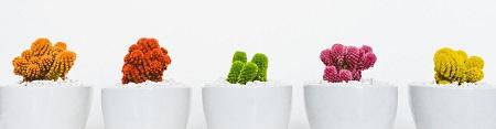 5 colourful cactus plants